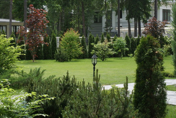 landscaping-187